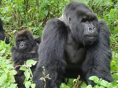 Best Gorilla Trekking Safari Company