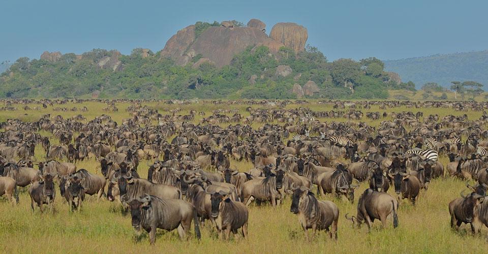 Tanzania-Wildebeest-Gary-Strand