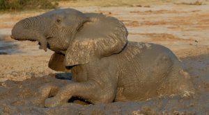 Wildlife Safaris in Botswana