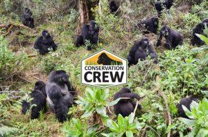 African Gorilla Tours