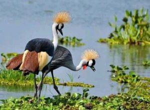 Visit Uganda Tours